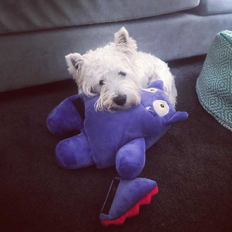 windsor_westie with Tearrible toy